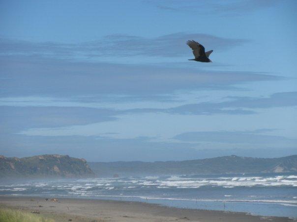 Chiloe Strand